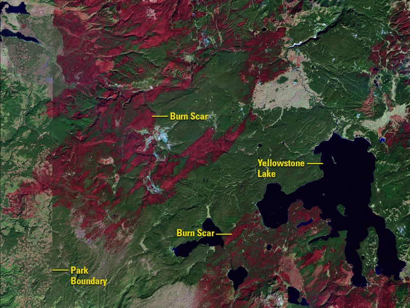 Yellowstone fire recovery before