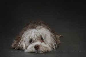 Beautiful Portraits of Dogs by Marijke Mooy
