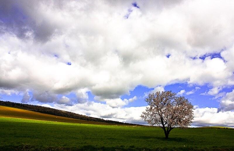 noureddine zekri - tree and clouds