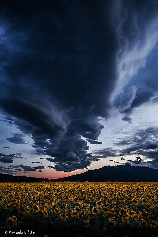 Fotis Mavroudakis - Field of sunflowers