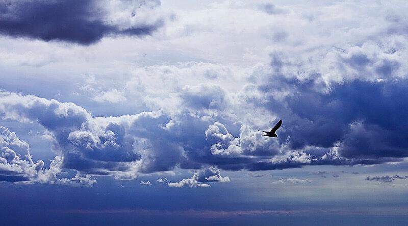 Greg David bird clouds