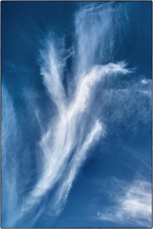 david constance bird shaped cloud