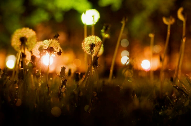 maria izaurralde - dandelions of the urban jungle