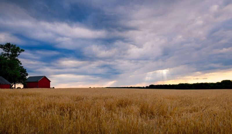 Andy Farmer - Farm Scene