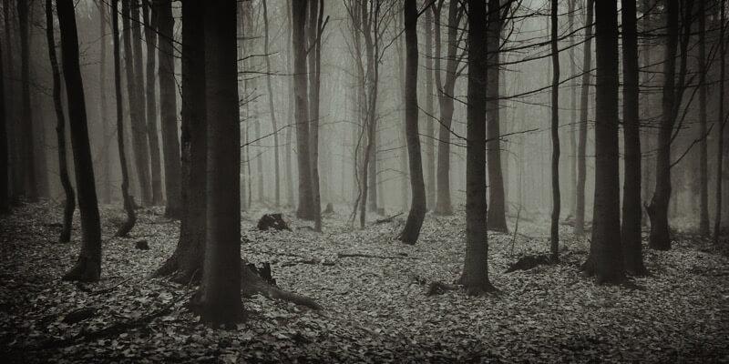 Jaromir Hron - Autumn