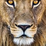 10 Tips for Better Wildlife Photography