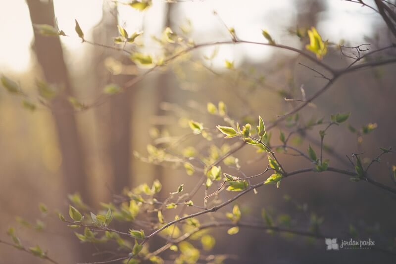 golden hour branches