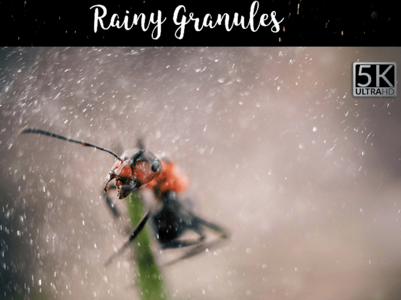 rainy photo overlay