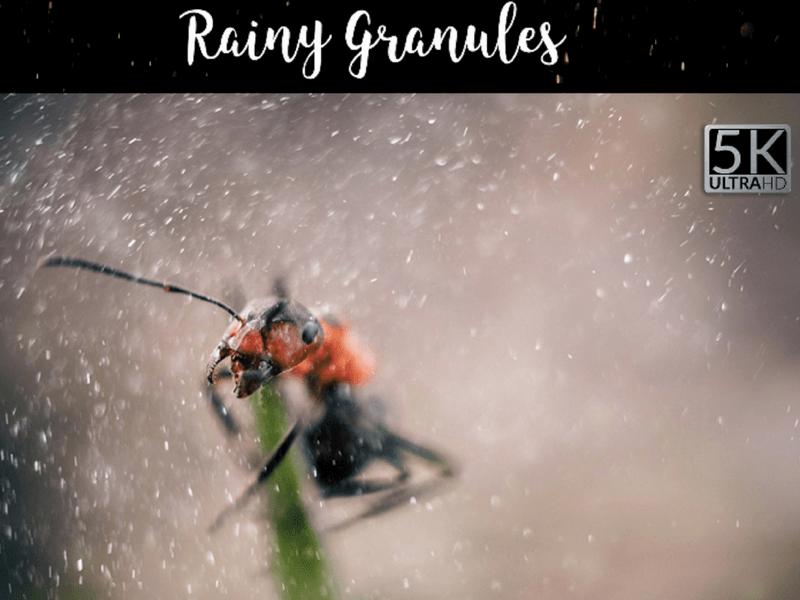 rainy photo overlay