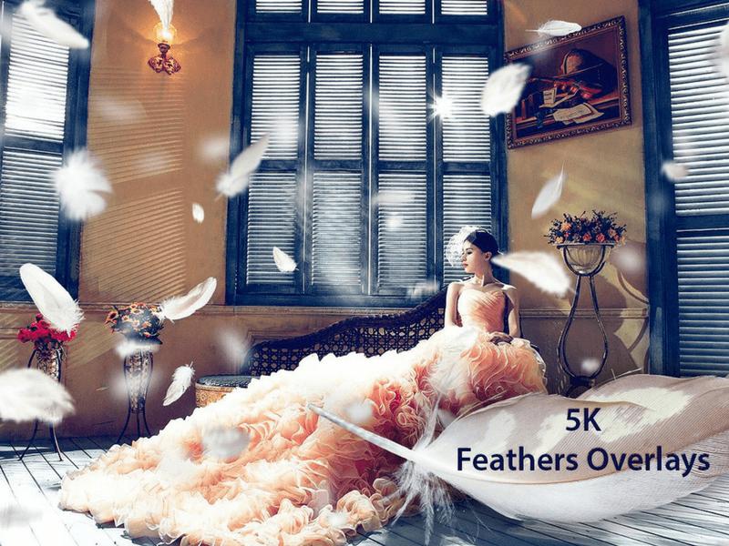 feathers photo overlay