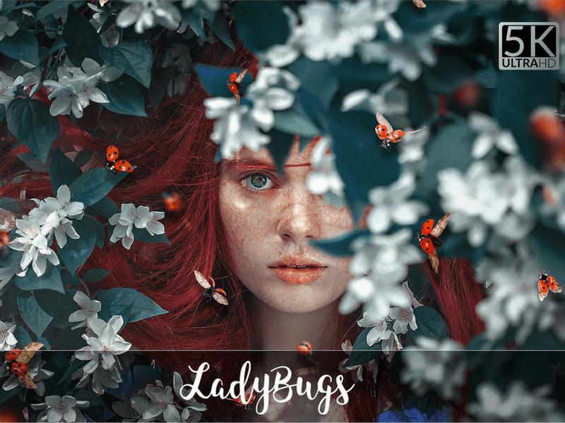 ladybugs photo overlay