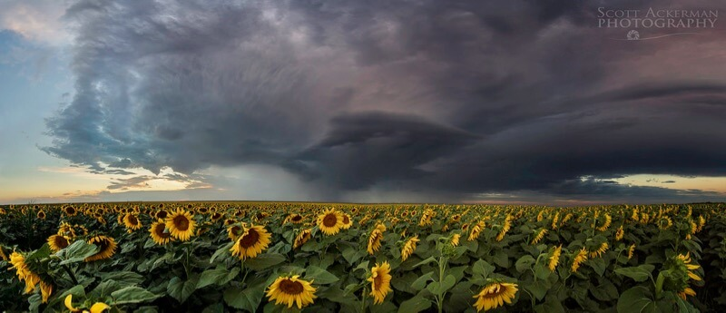 Scott Ackerman - Sunflower and the Storm