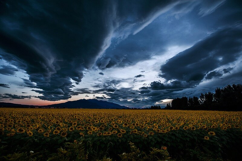 Fotis Mavroudakis - Sunflower field under a stormy sky