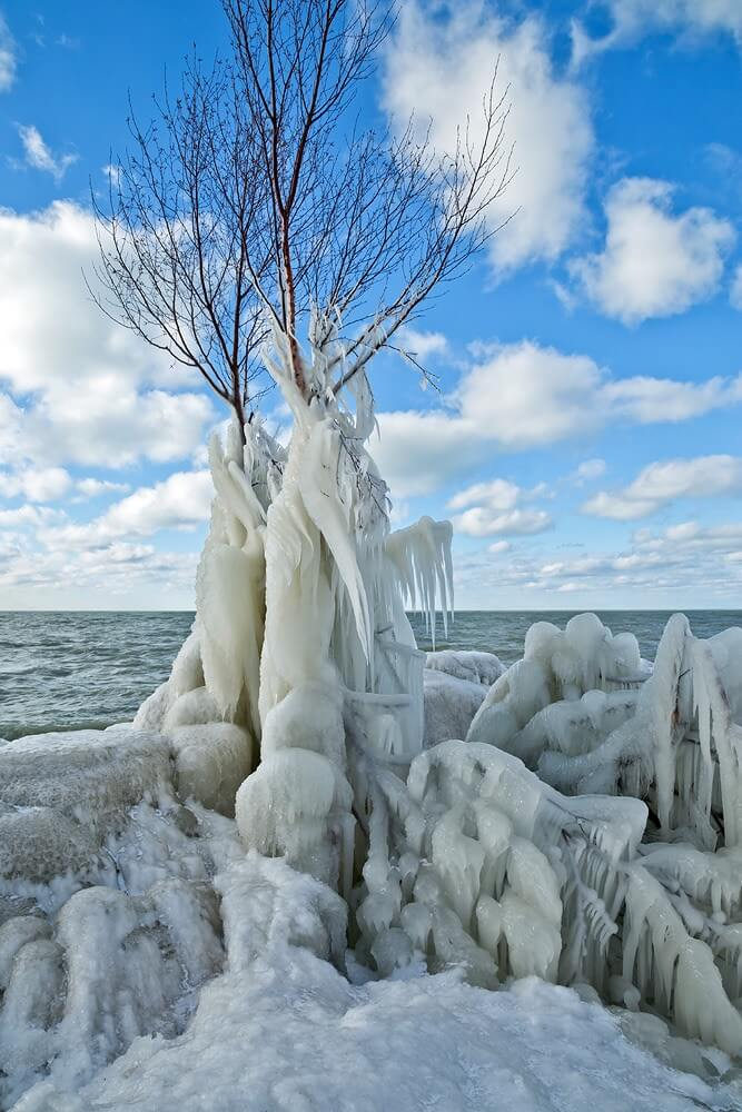 Corrie White frozen tree