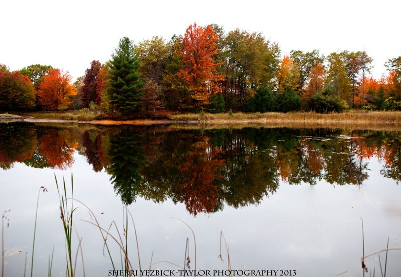 Sherri Yezbick-Taylor Fall Michigan