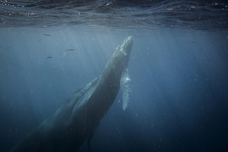 Christopher Michel - Mother & Daughter Humpback