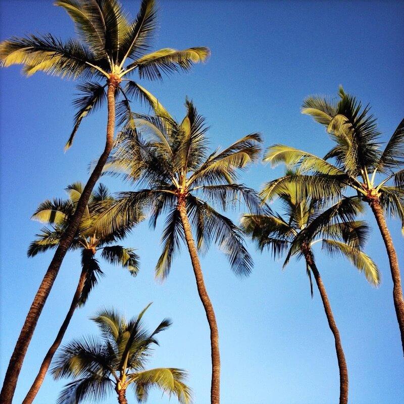 Sharon LuVisi palm trees
