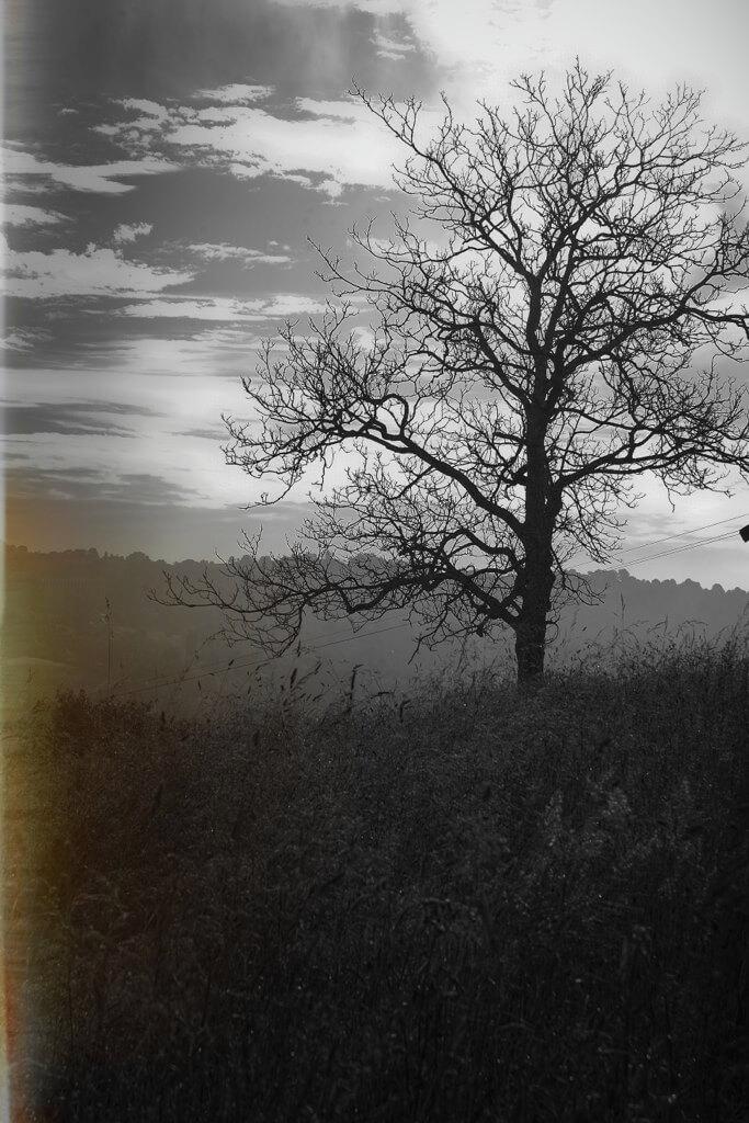 benoit coppin - Drama tree