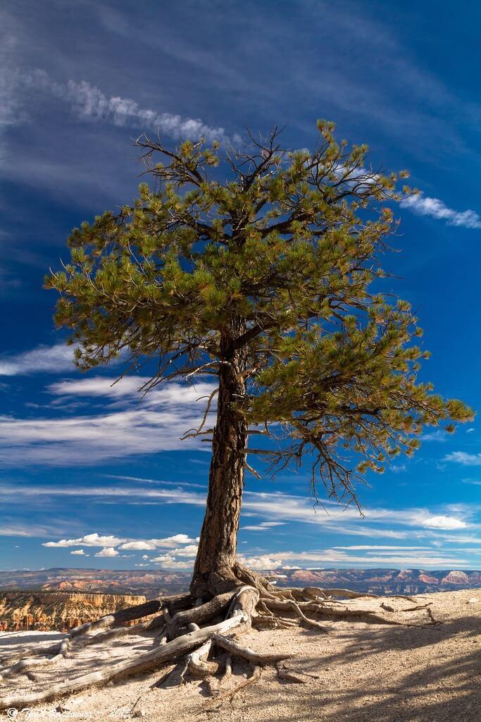 Thad Zajdowicz Bryce Canyon National Park