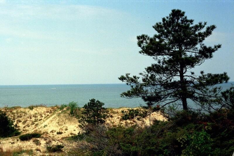 pmvarsa - Dunes with Pine Tree