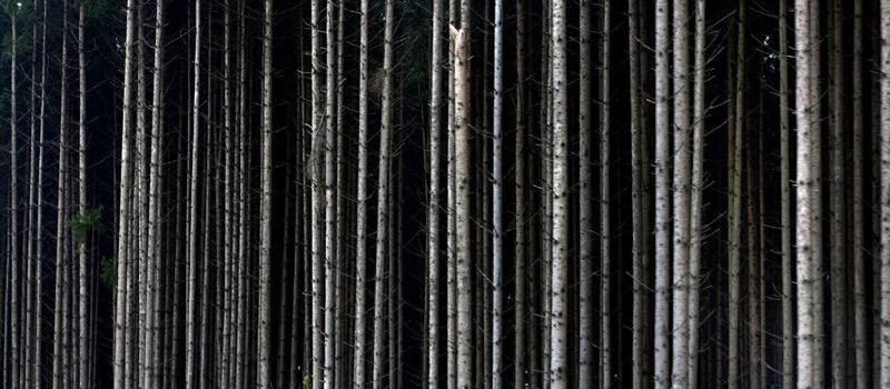 Julio López Saguar - Forest