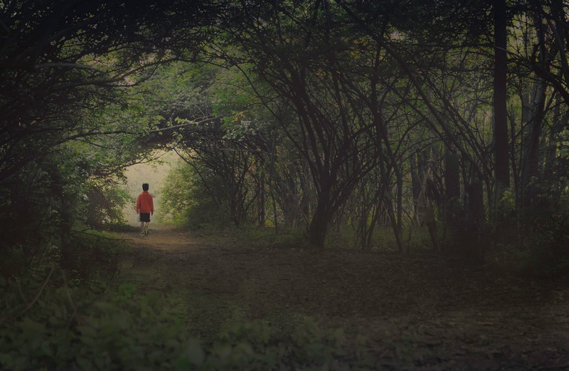jordan parks forest path