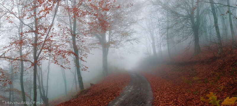 Fotis Mavroudakis - Foggy autumn forest road