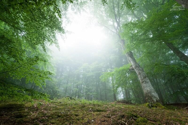 Marco Bergner - Enchanted Forest