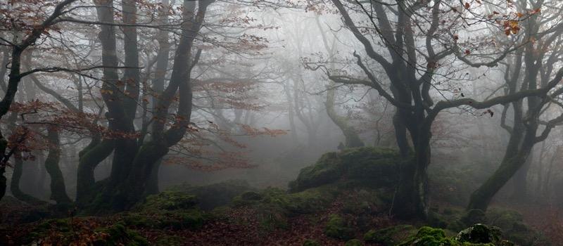 Julio López Saguar - Autumn Forest