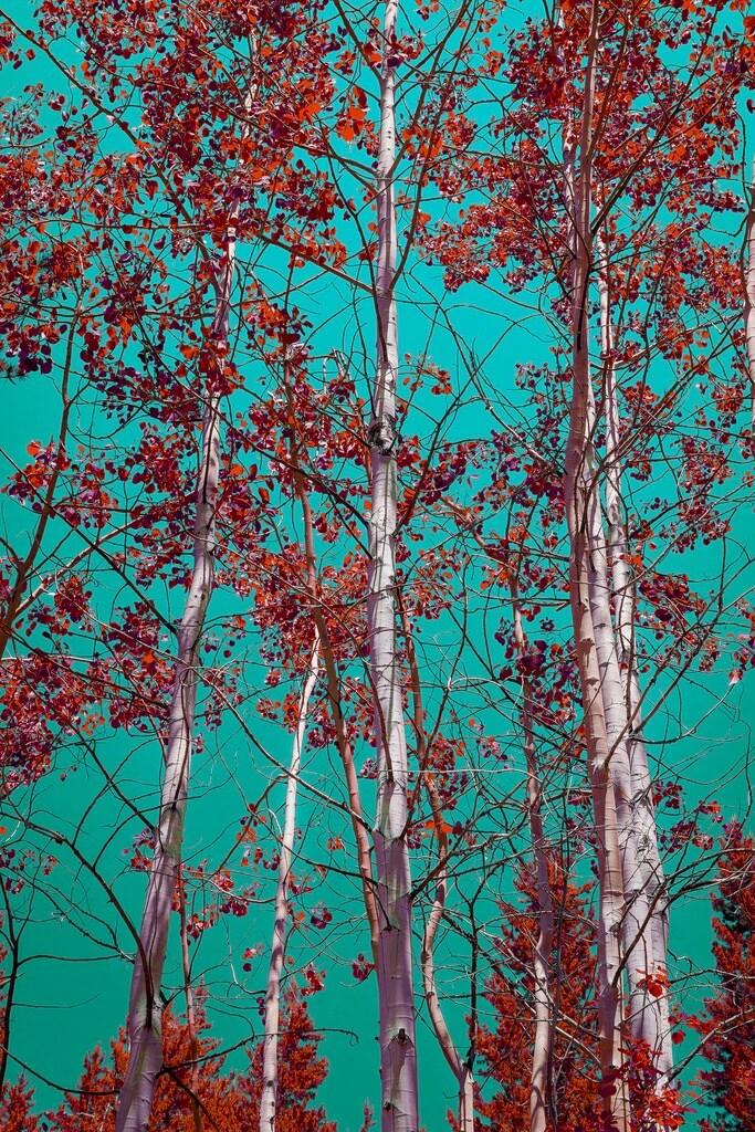 Ken Lane Grand Teton National Park