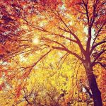 Tree Photography Inspiration: 39 Beautiful Examples