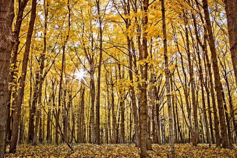 TroyMarcyPhotography - Autumn Timber