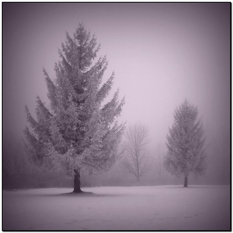 John Church snow mist trees