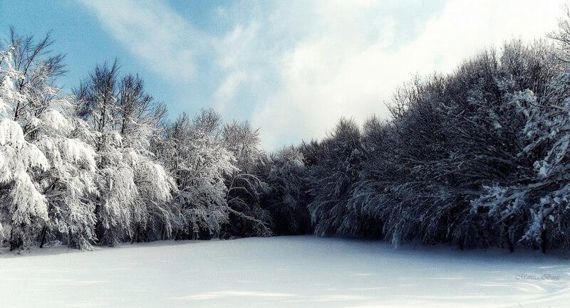 Marina Buric snow forest