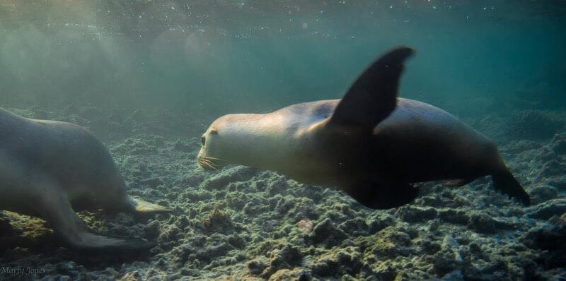 Marty Jones seal