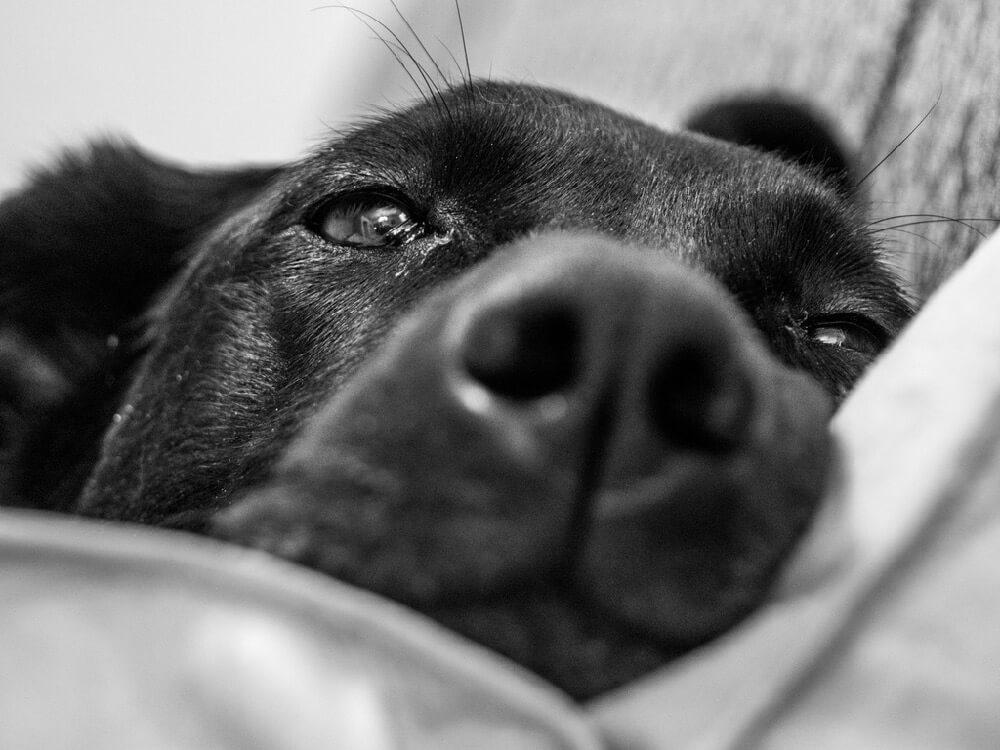 bw dog photo