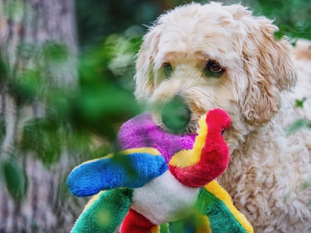 favorite dog toy