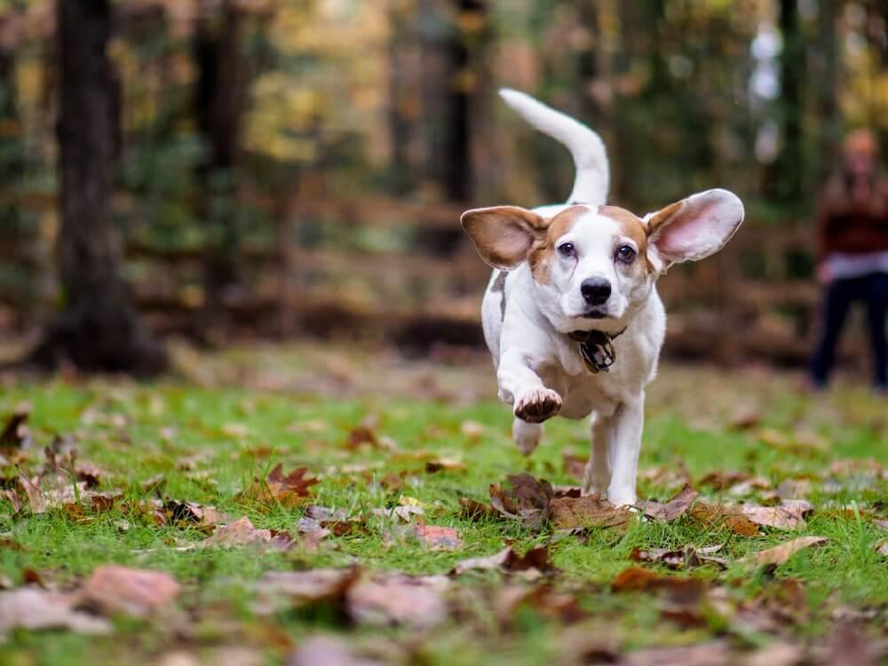 cute running dog