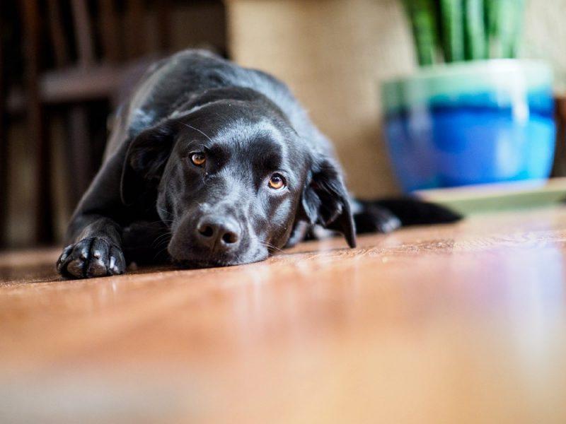 Rock Climber Turned Professional Pet Photographer: Wonderful Dog Photography and Tips from Sagar Gondalia