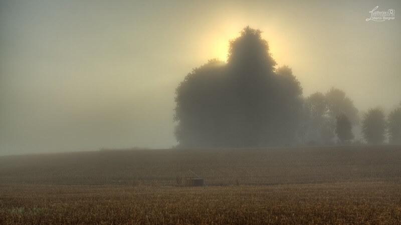 Marco Bergner - Misty Field
