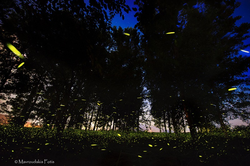 Fotis Mavroudakis - Fireflies in the woods