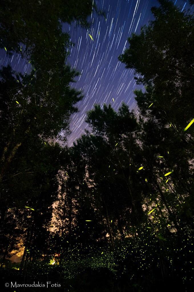 Fotis Mavroudakis - Fireflies