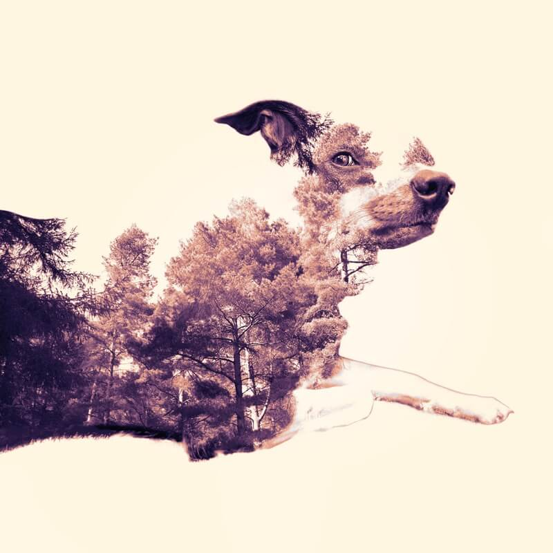 dog forest composite
