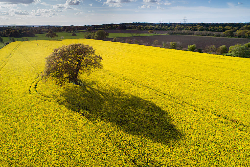 Long Shadows over Rapefield