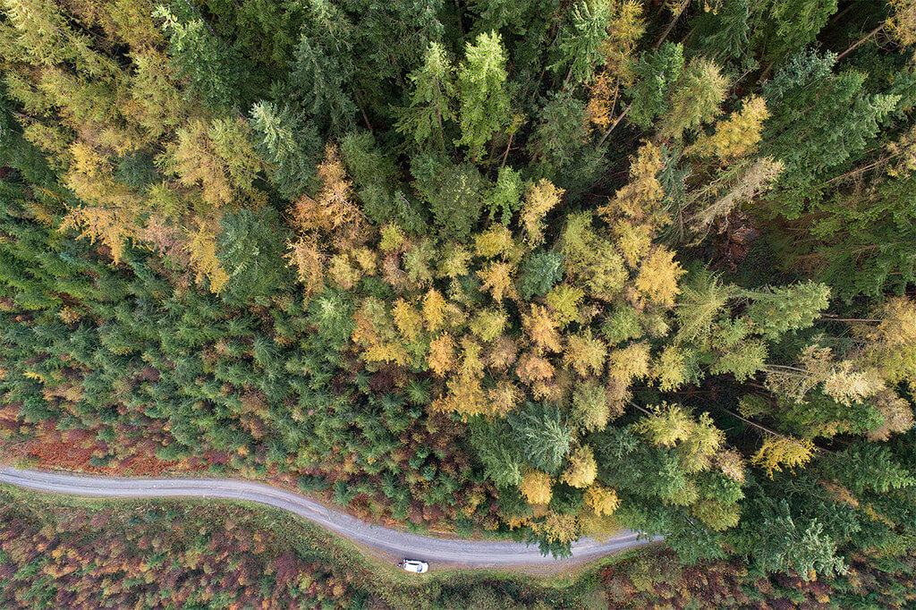 Topdown Autumn Trees