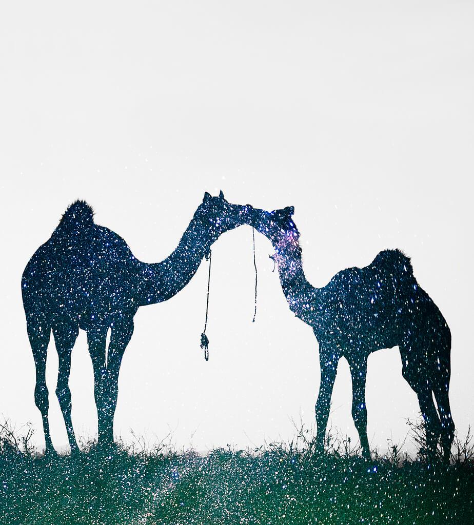 Nimit Nigam - Stars camels