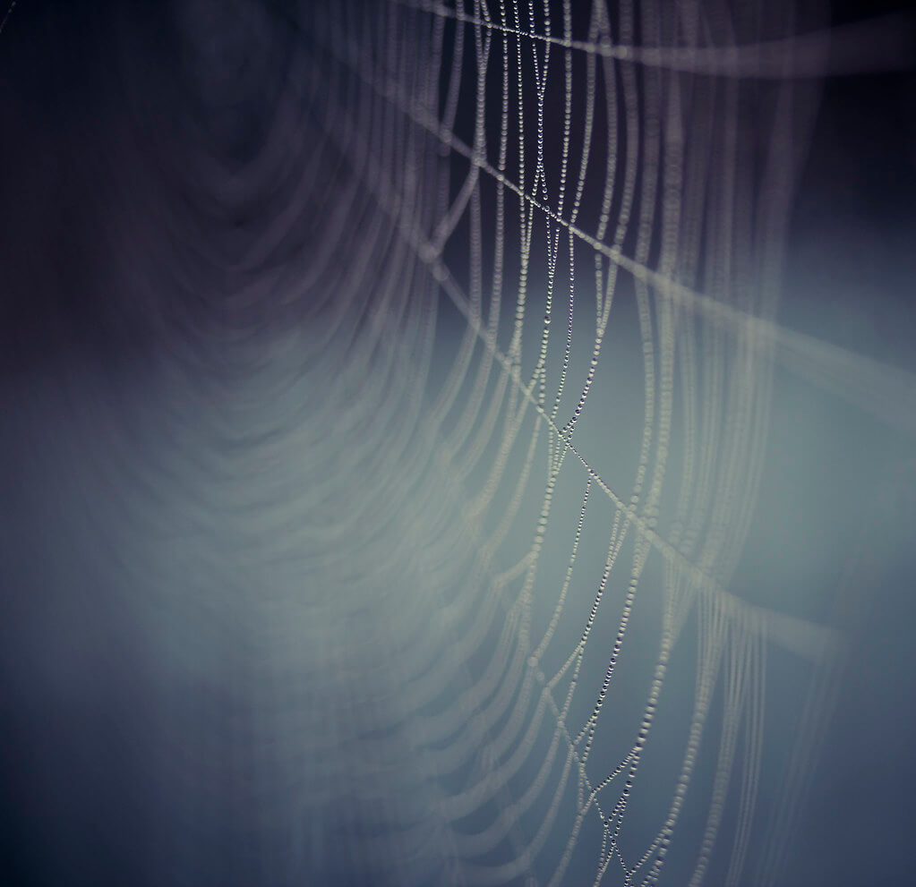 Sarah Bourque - Morning dew spider web