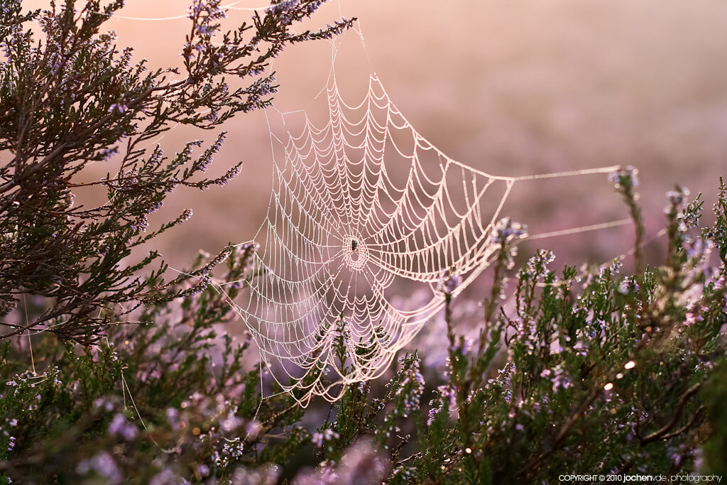Jochen Vander Eecken - spider web dew bokeh.