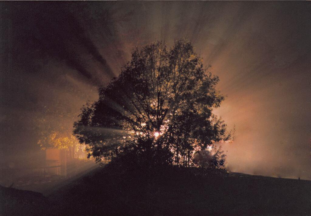 static view - Baum bei Nacht mit Lichtstrahlen