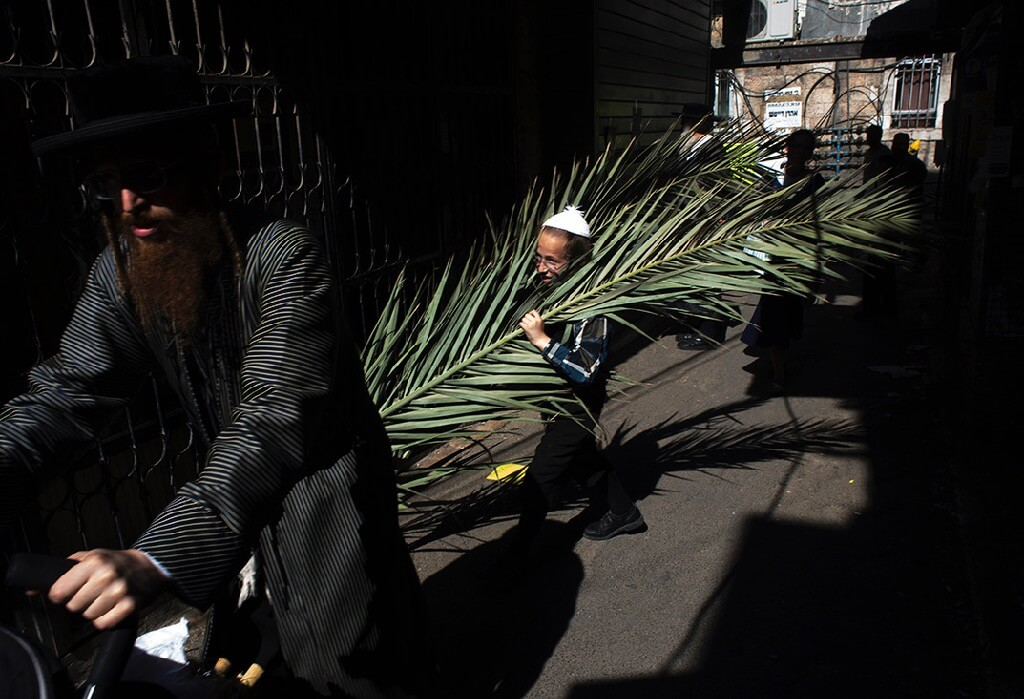 ilan Ben yehuda man carrying fronds